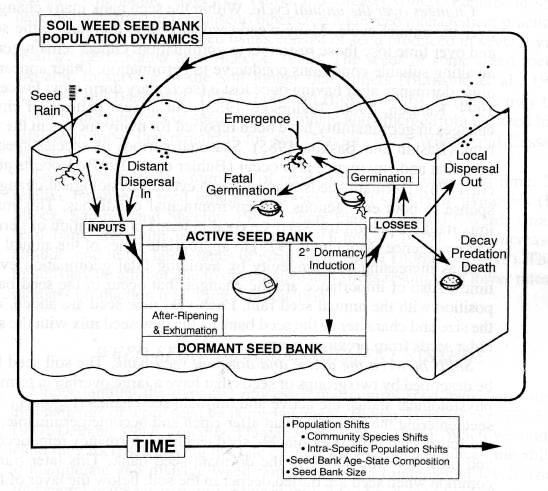 Figure 1 theannual life cycle of weed seed in the soil for Soil life cycle